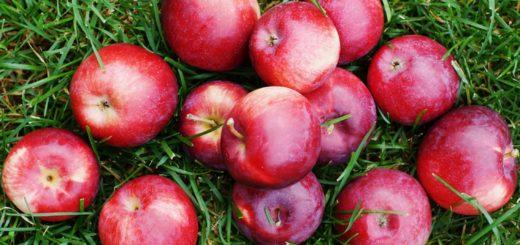 Sad. Jabła. Williams Orchard. Kanada. POlki