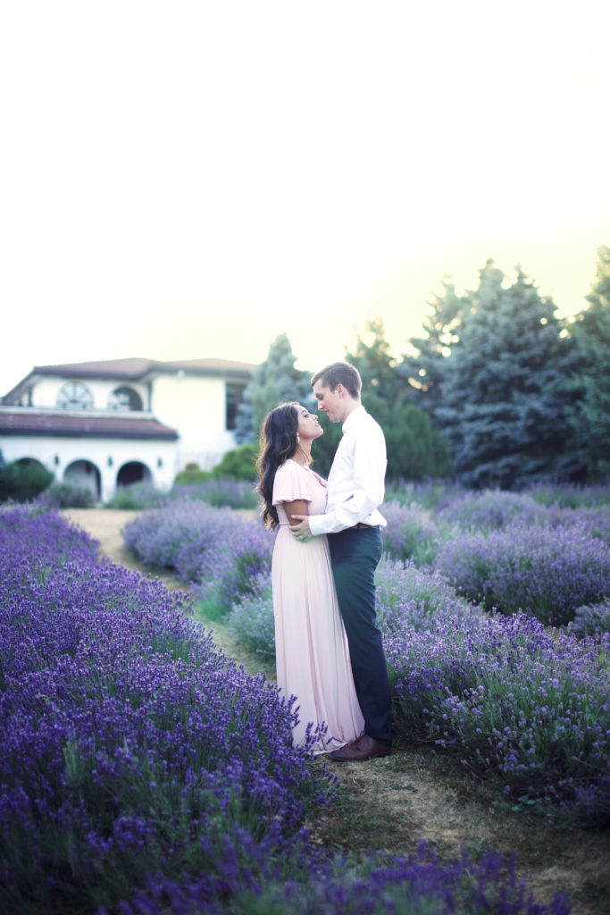 photo42 engagement photography mississauga lavender field photo session Weir's lane lavender brampton wedding photogaphy